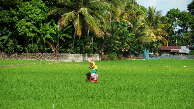 Sumatran Village Tour
