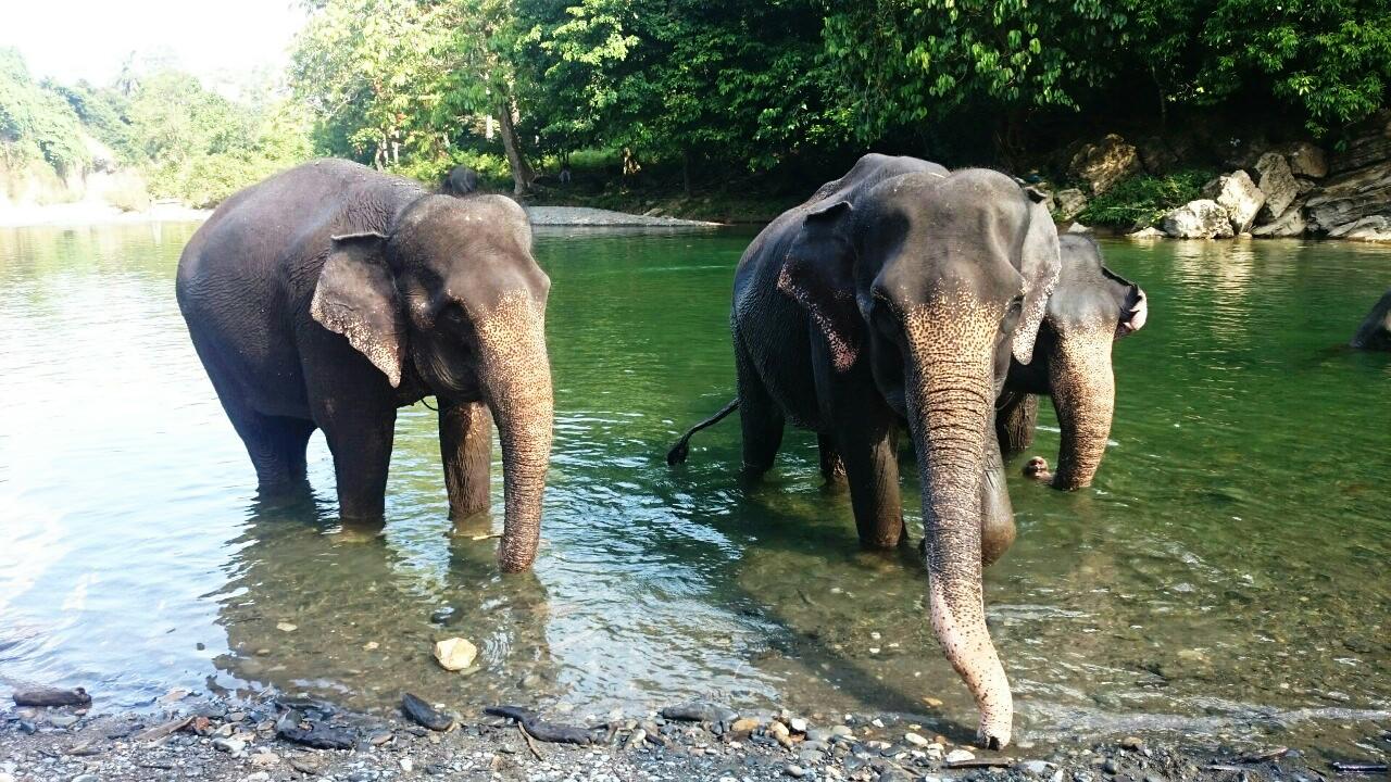 Tangkahan Elephant Tour